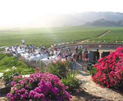Ensenada Wine Tasting Tours